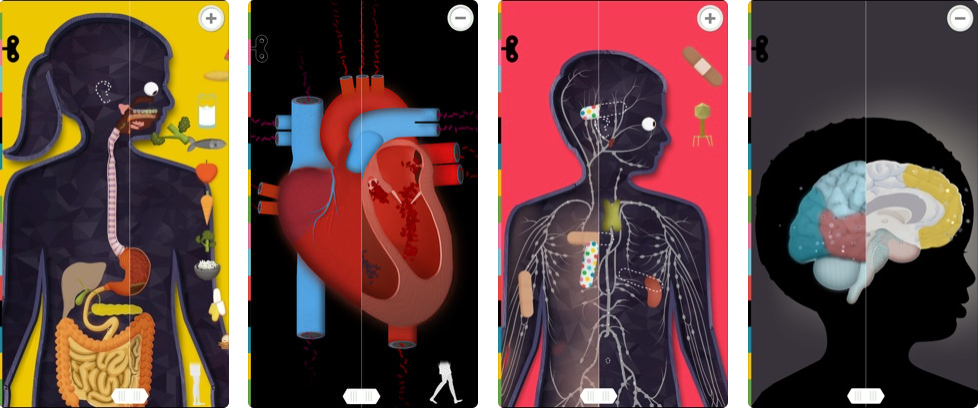human body - kids learning apps